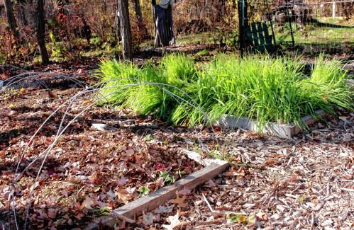 Ask a Local Master Gardener: Time for a winter mulching - GazetteNET