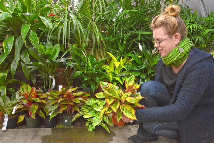 Plants techniques to keep indoor air clean in winter