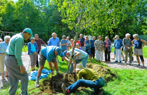 Chesterfield honors Bill Jolly by planting trees