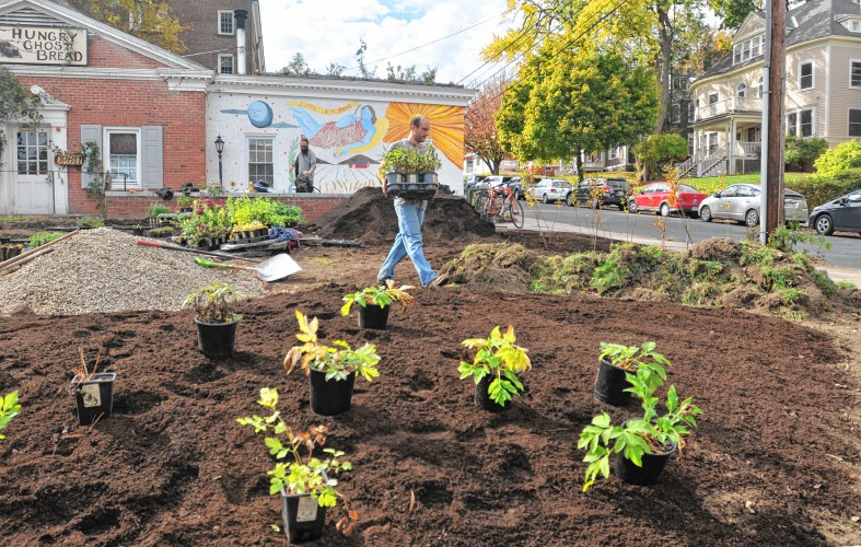 An amphitheater nestled among medicinal plants in northampton will owen wormser co creator of local harmony provided landscape design for the new garden at the hungry ghost bakery gazette staffcarol lollis buy this workwithnaturefo