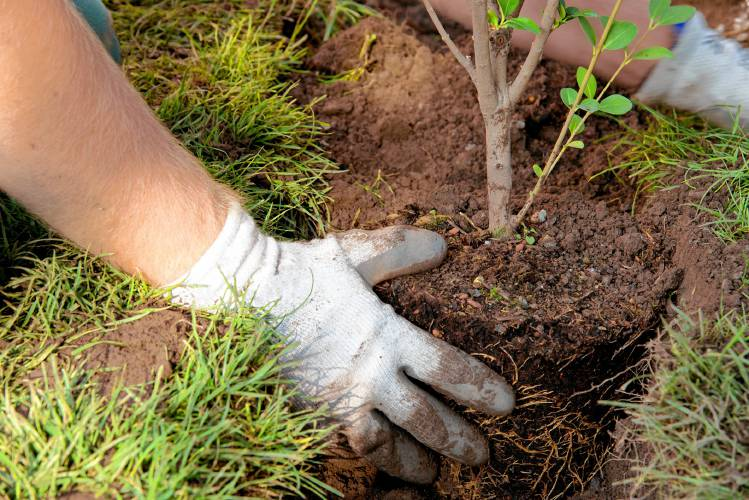8d843631cbf3 Get growing  How to plant a tree