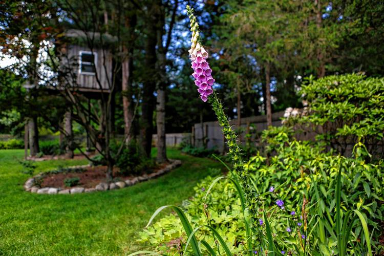 Peter Schoenberger of Hadley enjoys sharing his passion for plants