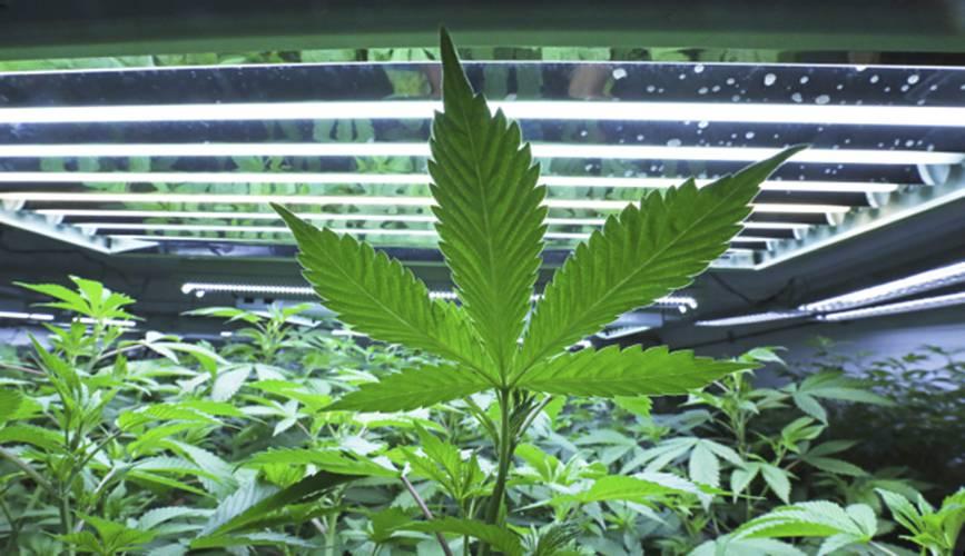 Company Close To Opening 1st Marijuana Dispensary In North Amherst