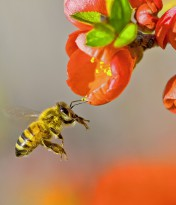 Stricter regs for neonicotinoids supported by Valley