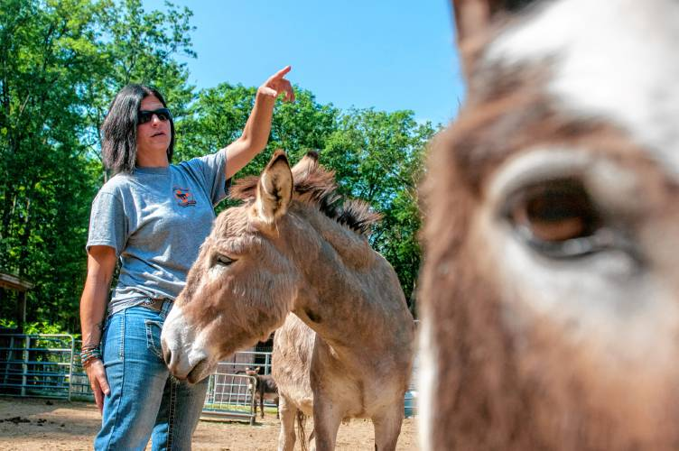 Donkey dumping' remains a problem, but Granby family works