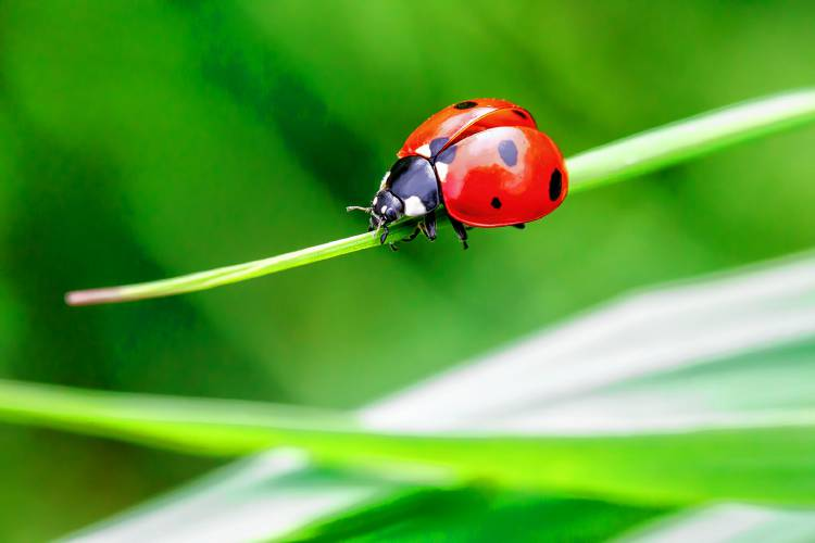 How To Handle Ladybugs
