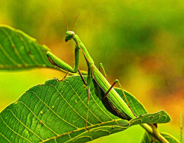 Earth Matters What Color Is Your Praying Mantis