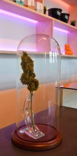 New medical pot dispensary opens doors in Easthampton