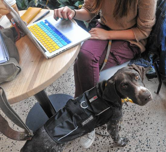 Creature Comfort More And More College Students Are Moving In With Comfort And Service Animals