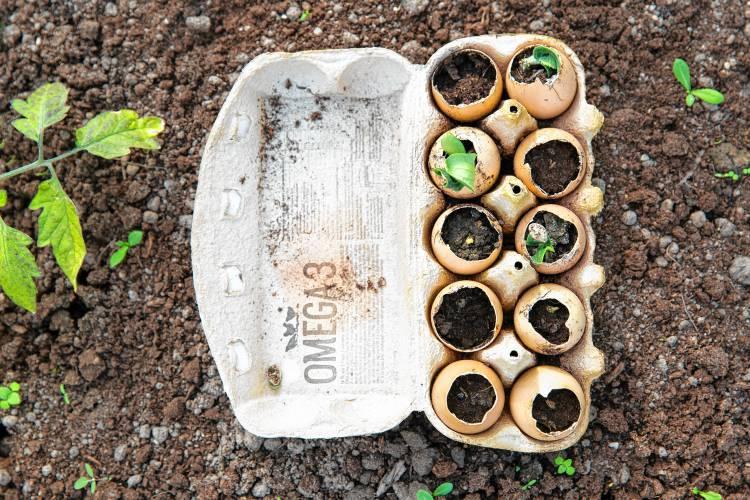 Ask A Local Master Gardener Starting Seeds