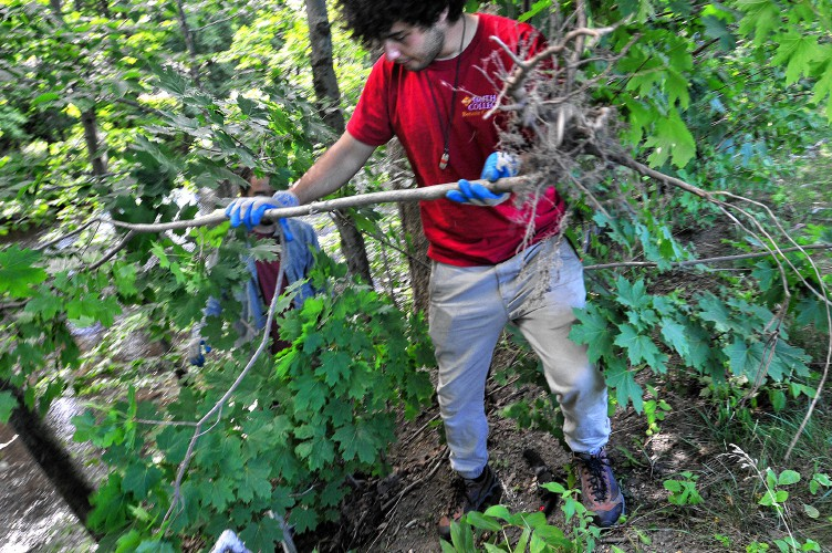 Mill River Group Attacks Invasive Plants