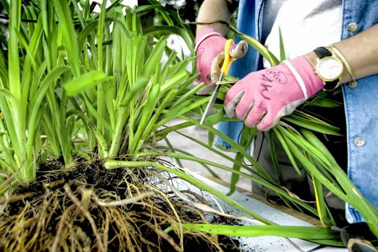 Get Growing How To Divide Your Garden S Perennials