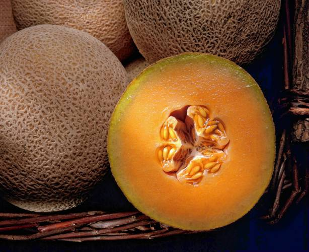 Valley Bounty A Perfect Season For Cantaloupe Unlike a normal cantaloupe, his insides were white instead of orange. valley bounty a perfect season for cantaloupe
