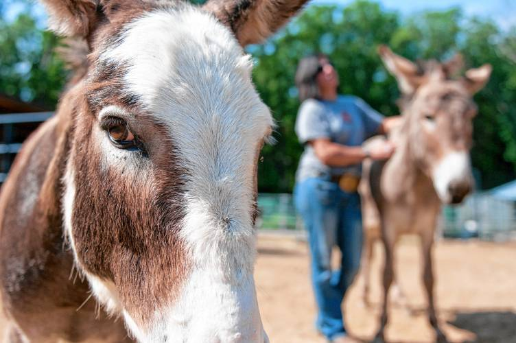 Donkey dumping' remains a problem, but Granby family works to give