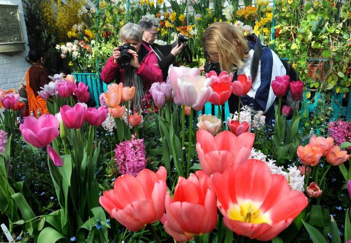 Smith mount holyoke prepare spring flower shows mightylinksfo